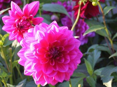 Blomsterknolde om vinteren