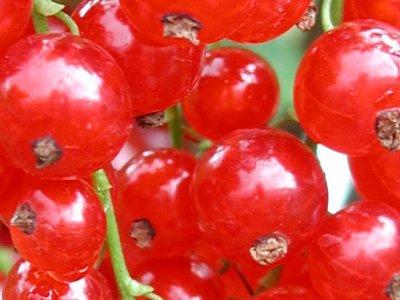 Frugt og bær mellem prydplanter
