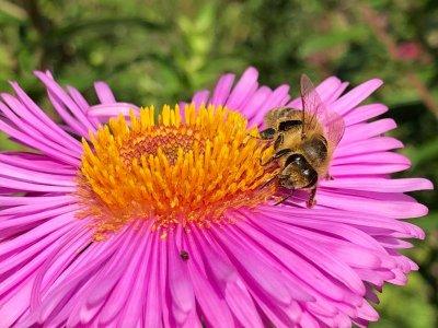 Husk blomster nær insekthotellet