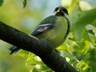 Fuglekasse i haven