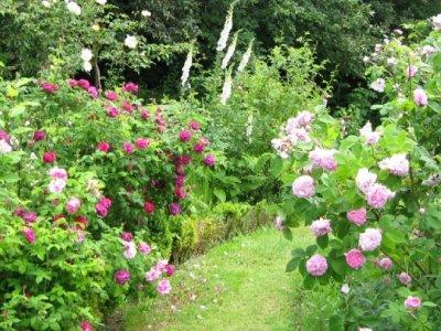 Lav det dejligste rosenbed